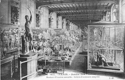 203 Jardin des plantes.  Galerie d'anatomie comprise