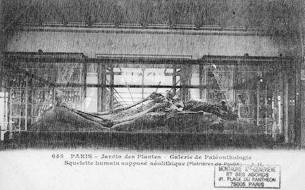204 Jardin des plantes. Galerie de Paléonthologie. squelle humain supposé nélithique