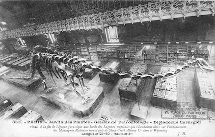 207 Jardin des plantes. Galerie de Paléontologie. Diplodocus carnegiel