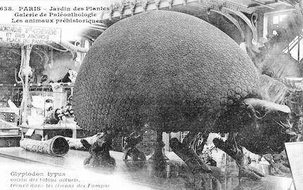 210 Jardin des plantes. galerie de paléothologie. Glyptodon typus
