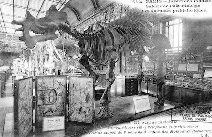 214 Jardin des plantes. Galerie de Paléontologie. Dinoceras mirabile