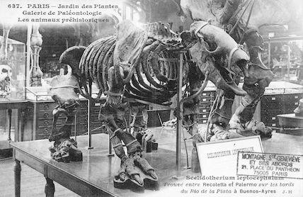 218 Jardin des plantes. Galerie de Paléontologie. Scelidotherium leptocephalum