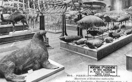 224 Jardin des plantes.  Morses et Phoques