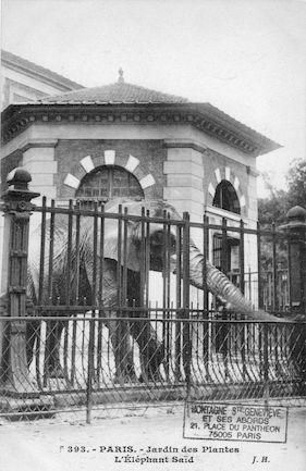 252 Jardin des plantes. L'éléphant Saïd