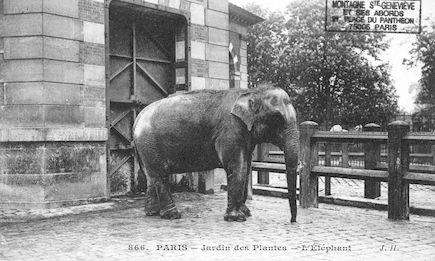 253 Jardin des plantes. L'éléphant
