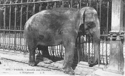 254  Jardin des plantes. L'éléphant