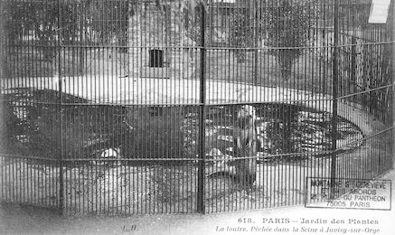 268 Jardin des plantes. La loutre pêchée dans la Seine à Juvisy-sur-Orge