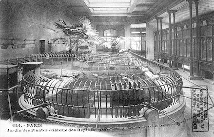 269 Jardin des plantes. Galerie des reptiles