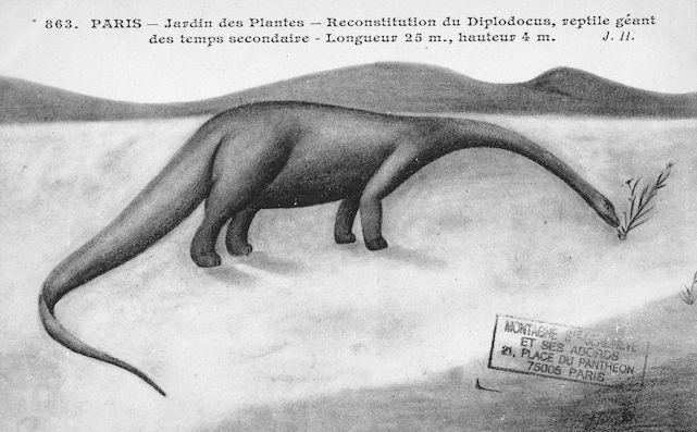 509 jardin des plantes reconstitution du diplodocus